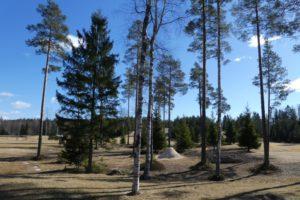 Kutosen ja seiskan välinen metsä. Aluetta on siistitty ja karsituista puista ja oksista on saatu runsaasti haketta levitettäväksi.